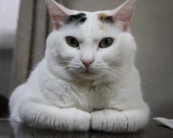 猫(ねこ、ネコ)